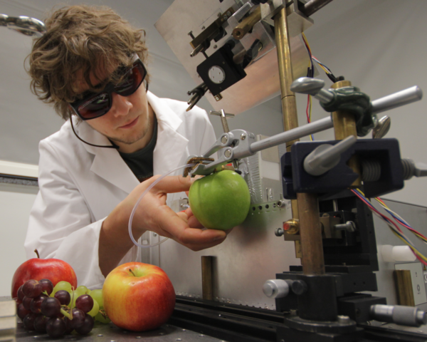 A student is testing an fruits in the laboratory